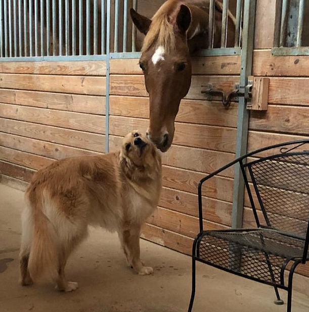 两只马图片大全可爱