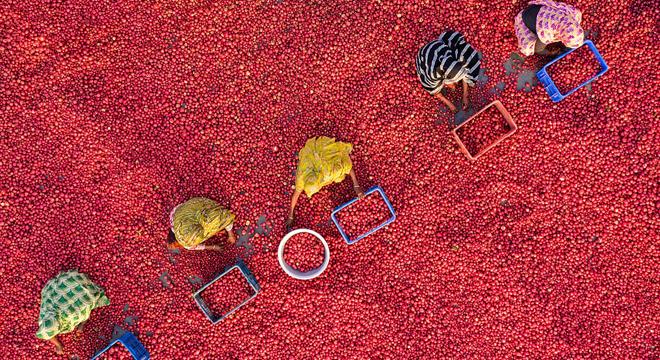 航拍孟加拉国工人清洗土豆场景 条件艰苦日?#38477;?jpg