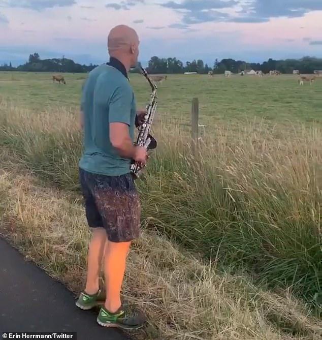美国男子在路边吹萨克斯 吸引大批奶牛上前围观 国芳