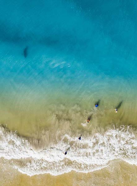 美摄影师海边玩无人机 拍到鲨鱼靠近孩子大声呼喊 吉林首虎被查
