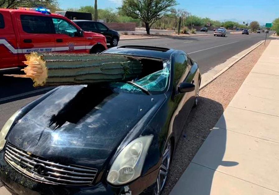 美国一司机撞倒10米多仙人掌 挡风玻璃被刺穿 中石油团购