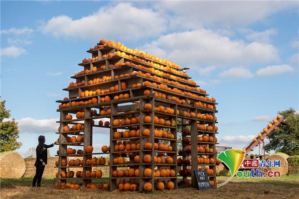 迎万圣节 英国一农场用近千颗南瓜搭建南瓜屋