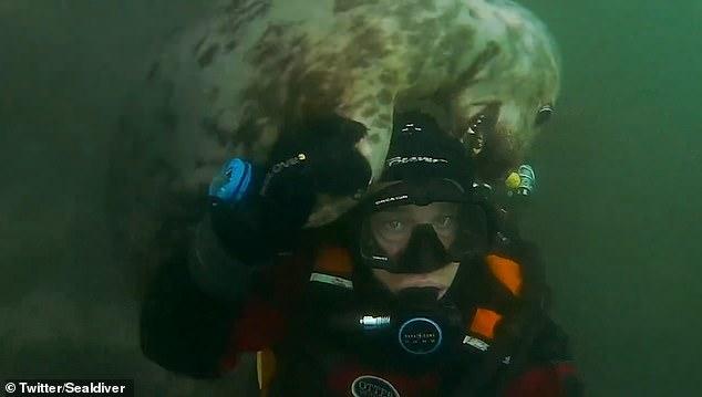英国一男子潜水遇灰海豹 与其互动嬉戏