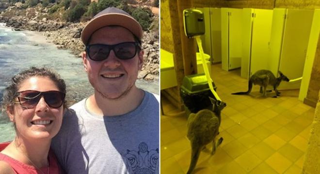 澳大利亚一景区内两只袋鼠争抢厕