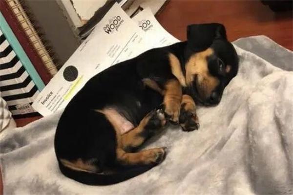 美国一家宠物医院误将狗实施安乐死 因名字相同打错电话
